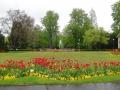 Газон с тюльпанами