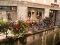 Цветы вдоль набережных