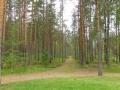 В лесу у мемориала