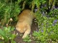 Валаамский кот