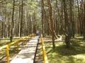 """""""Танцующий лес"""""""