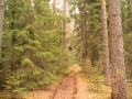 Лесные дорожки