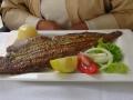Рыба-язык